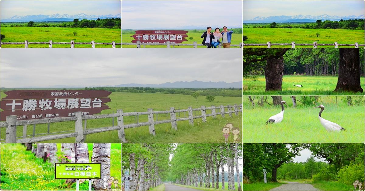 北海道道東自駕|帶広順遊景點:家畜改良中心 十勝牧場之白樺並木x夫妻柏x展望台