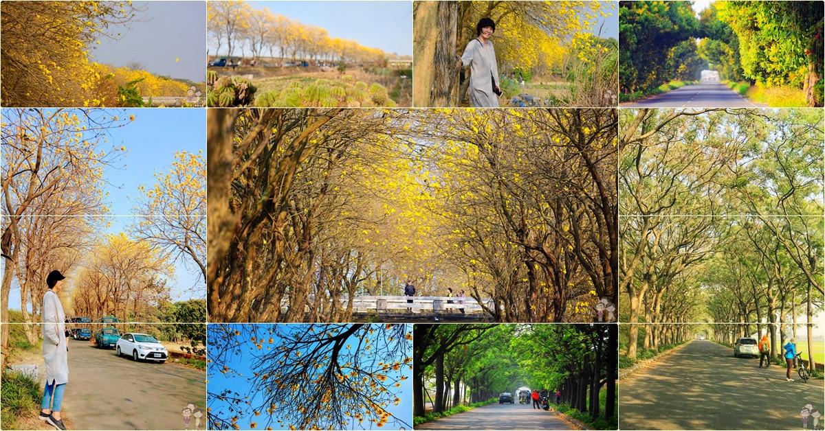 嘉義六腳|全台最美又最長的苦楝樹綠色隧道,過了綠色隧道,還有繁花盛開的朴子溪畔黃金風鈴木