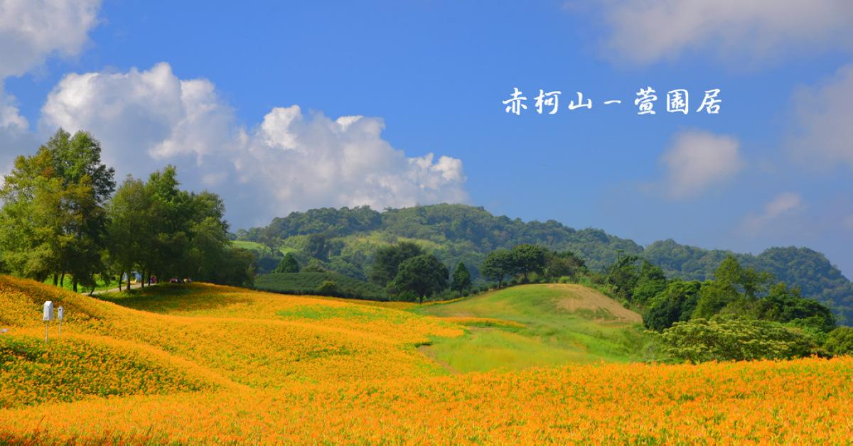 花蓮金針花季 花兒盛開的赤柯山,滿山盡是黃金甲