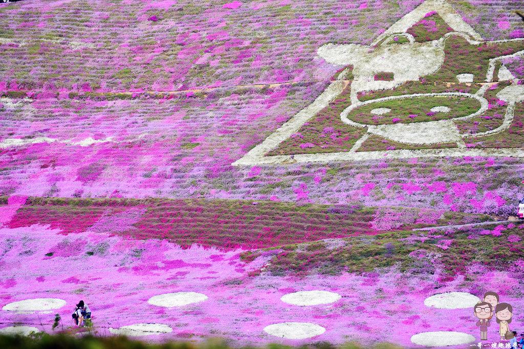 北海道道東自駕|網走大空町,季節限定的美景~浪漫粉紅花毯:東藻琴芝櫻公園