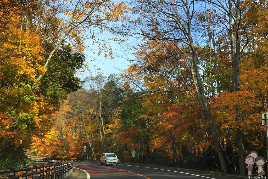 北海道賞楓|楓紅滿天的絕美景緻,支笏湖的秋色美到讓人想哭