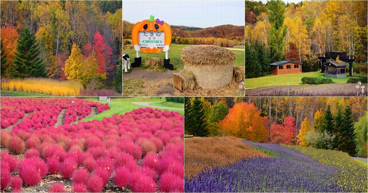 札幌賞楓景點|國營瀧野鈴蘭丘陵公園的秋色超迷人,還有可愛又紅通通的紅色掃帚草熱情綻放