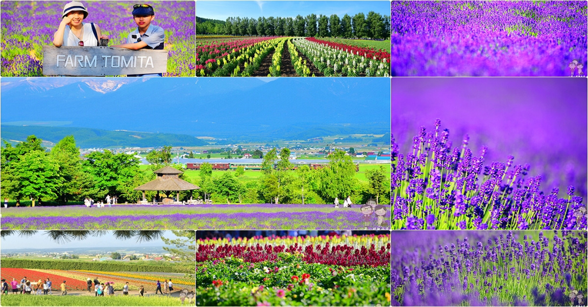 夏日北海道|富良野必遊景點~富田農場,紫色的魔幻魅力+彩色的花花世界