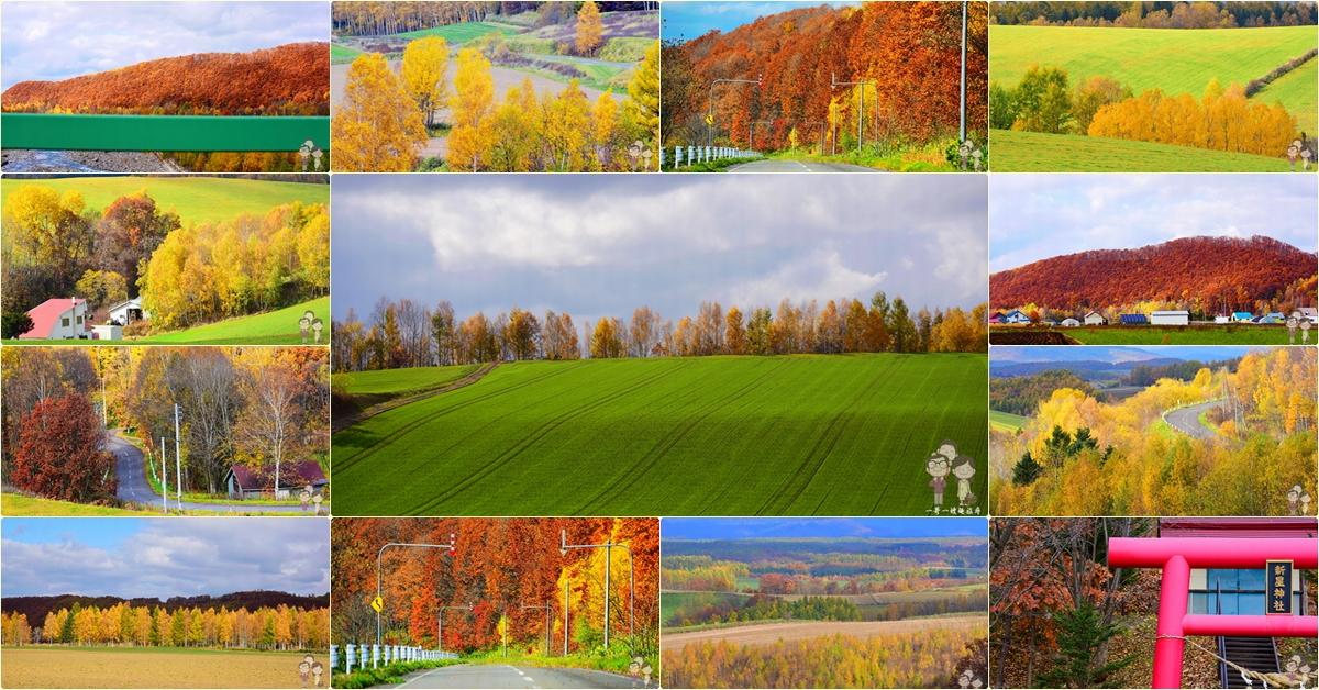 北海道美瑛的秋色|自駕在道道966號線賞美景x日之出橋x美瑛紅x三愛之丘x新榮之丘