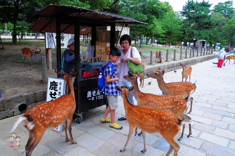 日本關西|奈良公園.日本三大名佛之首的東大寺盧舍那佛